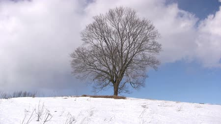 dub : Winter landscape, time lapse of  flying clouds above lonely maple Dostupné videozáznamy