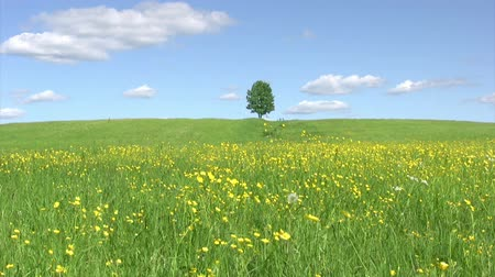 çevre : Lonely tree on green meadow against  blue sky background