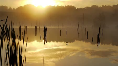 morning : Misty morning sunrise on the marsh