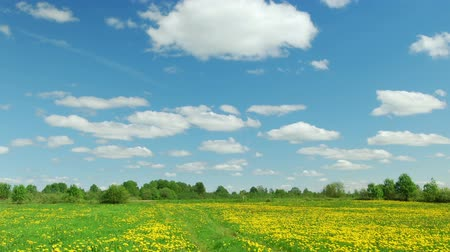 flower : Rural landscape with road in the dandelion field Stock Footage