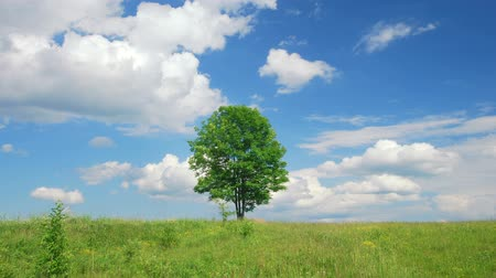 луг : Lonely tree on a meadow against sky with clouds
