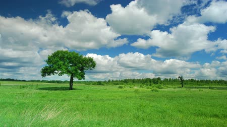 único : Lonely tree on a meadow against sky with clouds