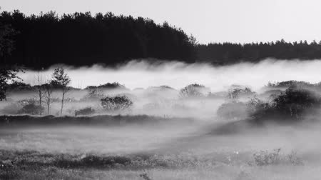 enevoado : Time lapse shot of the surrounding forest in the morning moving fog Vídeos