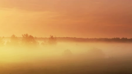 enevoado : Panoramic shot of the surrounding forest in the morning moving fog