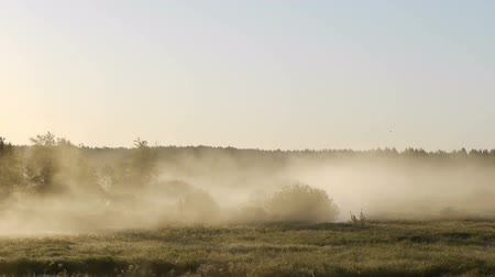 enevoado : Timelapse shot of the surrounding forest in the morning moving fog