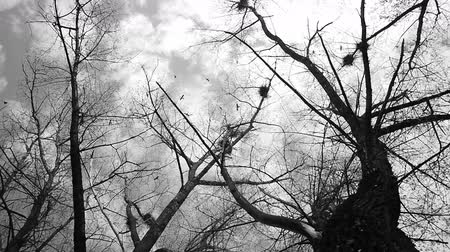 mystik : Mystic autumn scene, silhouette of crows flying around nests Dostupné videozáznamy