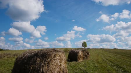mavi gök : Slider shot of hay bales field against lone tree