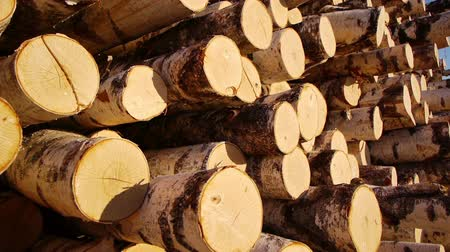 madeira : Slider shot of stack of wood logs Vídeos