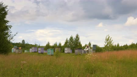 шмель : Videoshoot of work of  beekeeper farmer on forest apiary on rain weather Стоковые видеозаписи