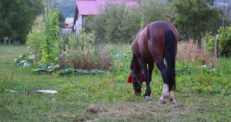 cavalinho : A horse eating grass.