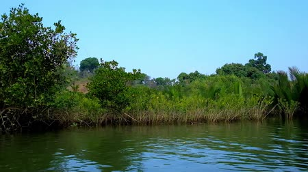 alap : The thicket of nypa palms and mangrove shrubs on the banks of Kangy river, flowing to the Bay of Bengal in Chaung Tha, Myanmar. Stock mozgókép