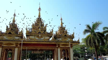bird sanctuary : YANGON, MYANMAR - FEBRUARY 27, 2018:  The flock of pigeons flies over the entrance gate of Zayer Yar Aung Myay Monastery, decorated with carved details and golden patterns, on February 27 in Yangon.