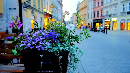 kamienice : The wildflowers in pot on the summer terrace of the restaurant in Grodzka street of Old Town (Stare Miasto), Krakow, Poland. Stock Footage