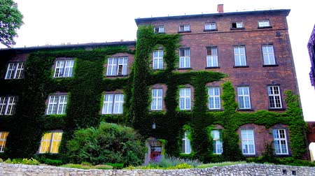 wisla : Exterior of brick exhibition center of Wawel Castle, overgrown with grapes, swaying on the wind, Krakow, Poland.