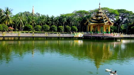 mallard : The small Buddhist shrine in the lake of Theingottara park, with a long bridge from both sides and lush greenery on the banks, Yangon, Myanmar.