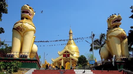bird sanctuary : YANGON, MYANMAR - FEBRUARY 17, 2018:  Great statues of chinthe (leogryphs) at the Maha Wizaya (Mahavijaya) Pagoda with a view on golden stupa and flock of pigeons on wires, on February 17 in Yangon