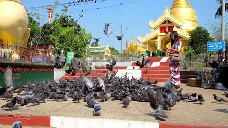 bird sanctuary : YANGON, MYANMAR - FEBRUARY 17, 2018:  Buddhist devotees feed the flock of pigeons at the Maha Wizaya (Mahavijaya) Pagoda with a view on the golden stupa on background, on February 17 in Yangon.