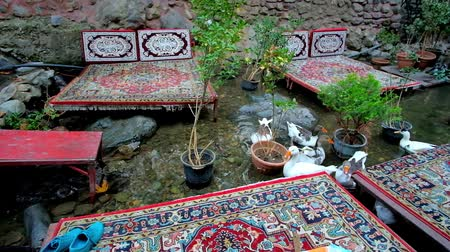 silk road : The restaurant on Darband mountain river is the nice place for domestic geese to beg some food from visitors, treating them with flatbread, Tehran, Iran. Stock Footage