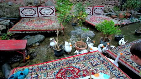 ковер : TEHRAN, IRAN - OCTOBER 25, 2017: The tourist feeds the geese, floating along the mountain river among the trestle-beds in outdoor restaurant of Darband , on October 25 in Tehran.