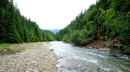 preserve : The fast and noisy Tereblya river in Carpathian mountains is lined with woodlands, its perfect place to walk along the bank and enjoy the nature of Ukraine.