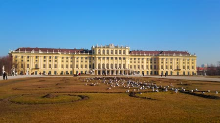 ウイーン : Enjoy the ornamental garden of Schonbrunn palace (Shlosspark, Bundesgarten) with a view on Baroque style palace, flower beds and flock of seagulls, sitting on the lawn, Vienna, Austria.