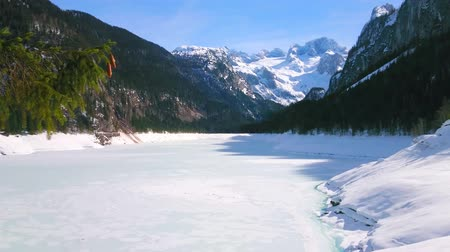 vacations cones : The fir tree branch with cones in front of the highland Gosausee lake, covered with ice and snow, surrounded by Dachstein West Alps, Gosau, Salzkammergut, Austria.