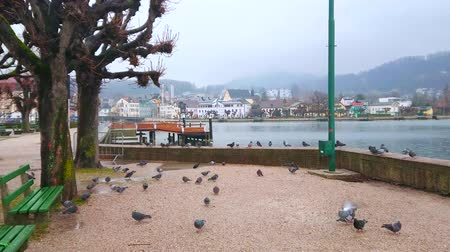 felső : Walk the rainy lakeside promenade with a view on flock of pigeons, Traunsee and foggy mountains around Gmunden, Salzkammergut, Austria.