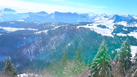 ski run : The line of frozen fir trees along the slopes of Zwolferhorn mount with a view on Spielbergalm peak, Alpine landscape and Wolfgangsee lake on the background, St Gilden, Salzkammegut, Austria. Stock Footage