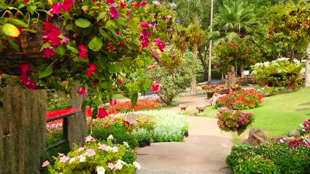 luang : Walk along the alley of ornamental garden with a view on hanging pots with flowers, trimmed bushes, juicy lawn and scenic flower beds, Mae Fah Luang garden, Doi Tung, Chiang Rai, Thailand Stock Footage