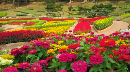 continuity : Panorama of Mae Fah Luang garden with scenic colorful flower beds, created of Western flower species, trimmed bushes and tropical trees, Doi Tung, Chiang Rai, Thailand