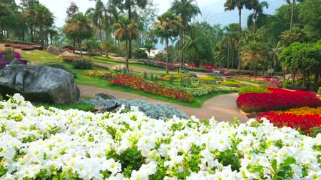 sikátorban : Enjoy the colorful flowers and Western style flower beds and flower species in Mae Fah Luang garden, Doi Tung, Chiang Rai, Thailand