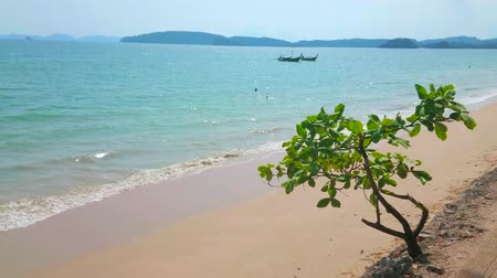 aonang : Watch the gentle tide along the Ao Nang beach with golden sandy shoreline and small green tree on the foreground, Krabi, Thailand