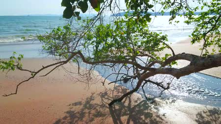 aonang : The sandy Ao Nang coast with a view on tilted tree branch and narrow creek, fast flowing to the Andaman sea, Krabi, Thailand Stock Footage