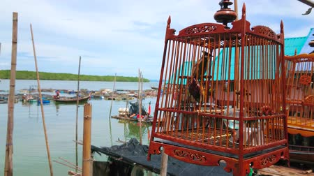 haven : The teakwood cage with red-whiskered bulbul bird at the haven of Ko Panyi floating Muslim village, the bird is a member of singing competition, taking place in Southern Thailand