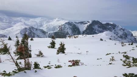 hegytömb : Panorama of Feuerkogel mountain plateau with rocky Alpine peaks, pines, leaned in the wind and hidden under high layer of pure white snow, Ebensee, Salzkammergut, Austria