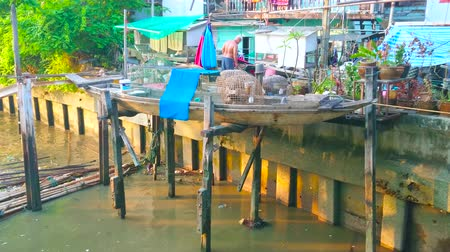 siamês : BANGKOK, THAILAND - APRIL 24, 2019: The coops with fighting cocks stand in canoe on the bank of Klong Saensaeb canal at the shabby huts, on April 24 in Bangkok Stock Footage