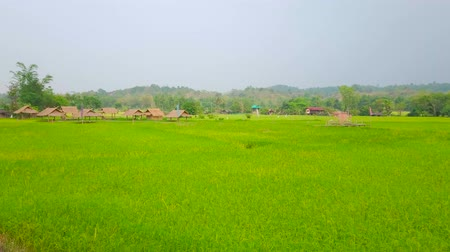 gleba : Panorama of green paddy field with scenic countryside lounge, containing bamboo pavilions and system of narrow bamboo bridges, Chiang Rai suburb, Thailand