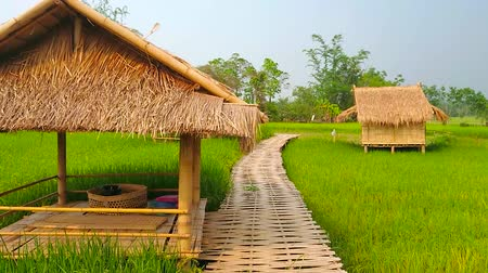 gleba : Walk the bamboo bridge among the juicy green paddy field with small bamboo summer houses for visitors to relax in shade and enjoy the nature and farmland, Chiang Rai suburb, Thailand