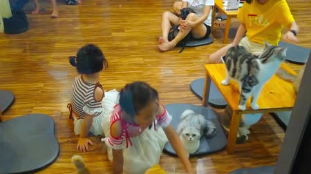 kotki : CHIANG RAI, THAILAND - MAY 10, 2019: Interior of cat cafe, families with kids spend time with felines, two little girls play and stroke the cats, sitting at the window, on May 10 in Chiang Mai Wideo
