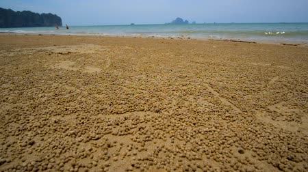 siamês : The surface of Ao Nang beach is occupied by sand bubbler crabs, living in burrows and making small sand balls during the low tide, Krabi, Thailand