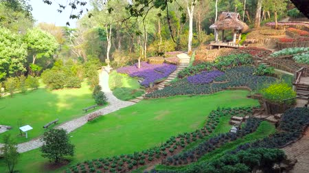 canteiro de flores : Walk through the Mae Fah Luang Arboretum and enjoy ornamental flower beds, juicy lawn and shady forest, Doi Chang Moob, Chiang Rai, Thailand