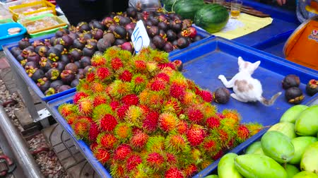 romênia : MAEKLONG, THAILAND - MAY 13, 2019: The small kitten plays on the tray with rambutans and mangosteens of a fruit stall in Maeklong Railway Market, on May 13 in Maeklong Stock Footage