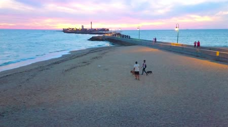 kutyák : CADIZ, SPAIN - SEPTEMBER 19, 2019: People walk the dogs along the beach with a view on Castillo de San Sebastian fortress and sunset over Atlantic Ocean, on September 19 in Cadiz Stock mozgókép
