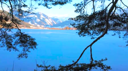 sníh : The view through the lush pine tree branches on frozen Zeller see lake, Zell am See, Austria