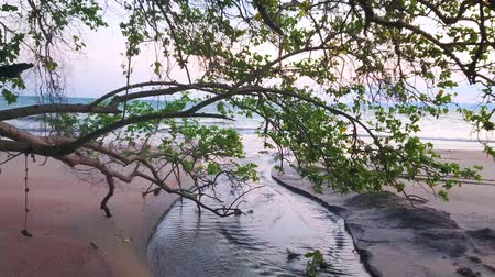 siamês : Watch the sunset from the sandy beach on Tonsai Bay with spread tropical trees and narrow curved creek, flowing to the sea, Ao Nang, Krabi, Thailand