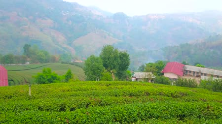 Panoramic view of foggy rural mountain landscape with tea plantation of Mae Salong Chinese Yunnan tea village, Chiang Rai, Thailand Stock Footage