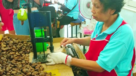 sziget : PHUKET, THAILAND - APRIL 30, 2019: The process of cashew nuts hand peeling in shop of cashew factory, on April 30 in Phuket Stock mozgókép