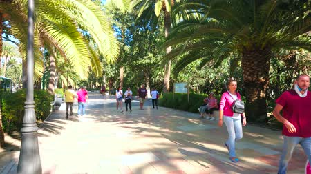 Андалусия : MALAGA, SPAIN - SEPTEMBER 28, 2019: The shady alley of Malaga park, lined with spread palm trees and lush tropical greenery, on September 28 in Malaga Стоковые видеозаписи