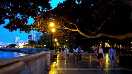 ficus : CADIZ, SPAIN - SEPTEMBER 22, 2019: People enjoy the evening walk along the coast of Atlantic Ocean in Alameda Apodaca and Marques de Comillas garden with spread ficus trees, on September 22 in Cadiz