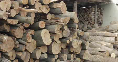 лесозаготовки : Timber logging. Freshly cut tree wooden logs piled up. Wood storage for industry.